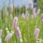 La flore du Livradois-Forez