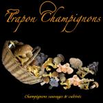 Trapon-Champignons